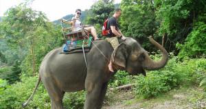 Elephant Trekking Koh Phangan Thailand