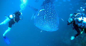 Sail Rock Divers Koh Phangan Thailand